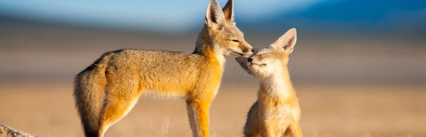 23 Photos of Adorable Animal Brothers & Sisters - 500px ISO