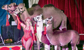 Ringling Bros. dies; small circuses live