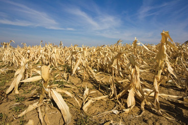 Nature: UMD Researchers Create Model for Climate Change, Variance In Crop Yields