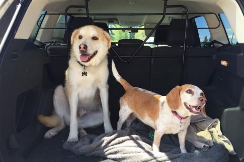 Dog-Friendly Patios and Markets in Edmonton - LINDA HOANG |...
