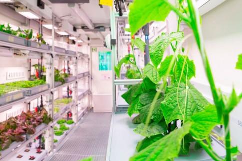 EDEN-ISS: Innovatives Gewächshaus vor Bewährungsprobe