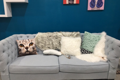 Parents: Now You Can Visit the Cat Cafe on Whyte FREE With Your...
