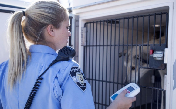 A day in the life of an animal law enforcement officer