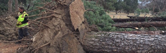 Heavy wind gusts cause outages, widespread damage