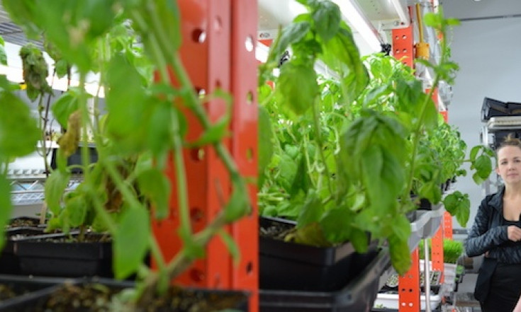 9 School Urban Agriculture Projects With The Power To Kickstart...