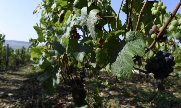 Quelles différences entre le vin bio, nature et en biodynamie ?