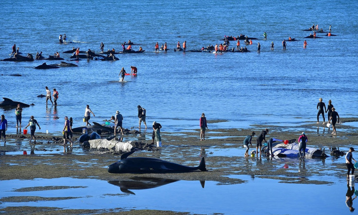 Mystery of Whale and Dolphin Strandings May Hinge on NASA Data