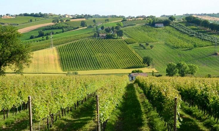 Nasce nelle Marche il primo vino italiano ottenuto dalla Canapa Sativa
