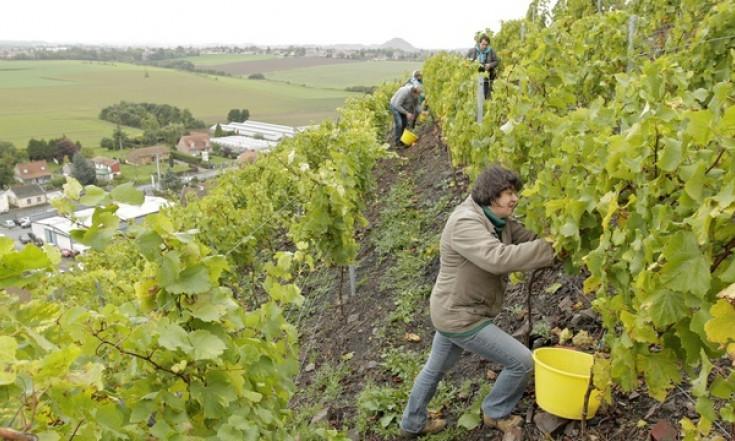 Pas-de-Calais: On va enfin pouvoir acheter le fameux vin de terril