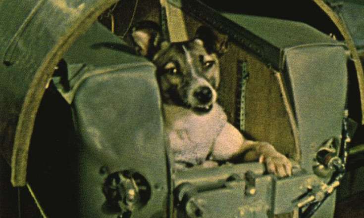 RIP, Laika: Pioneering Space Dog Launched 60 Years Ago Today