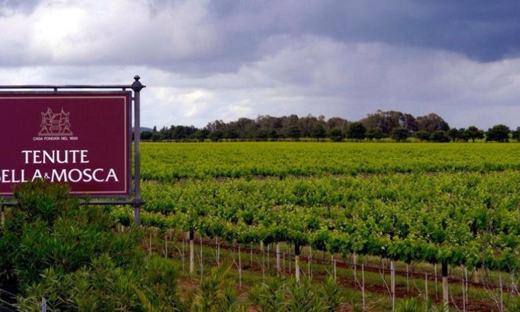 Sella & Mosca, rivoluzione per il vino sardo: più qualità e via dalla Gdo..