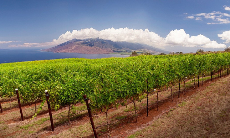 The world`s most unusual wineries