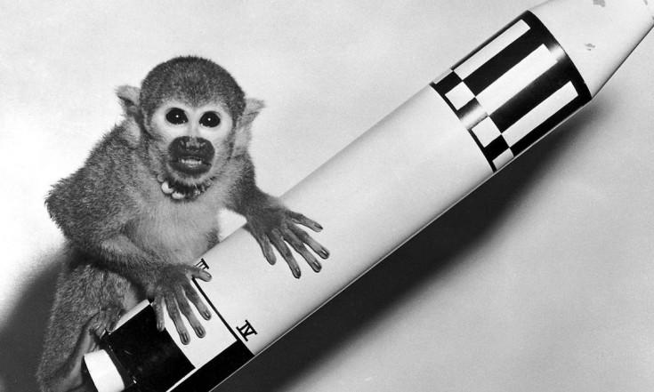 Tiere sind die wahren Weltraum-Pioniere